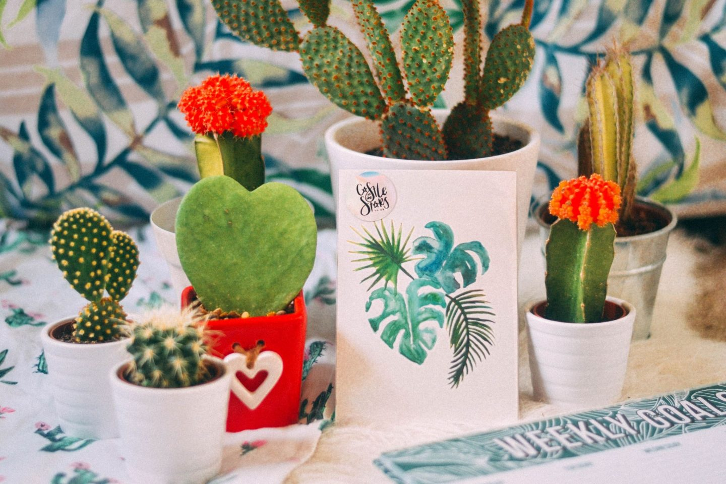 Pretty Pricks top tips for not killing your cactus